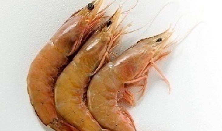 how to properly clean shrimp